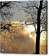 Trees On Misty Morning Acrylic Print