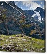 Trees On Top Of A Ridge At Glacier National Park Acrylic Print