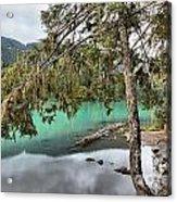Trees Overhanging Cheakamus Lake Acrylic Print