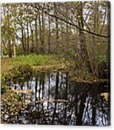 Trees Reflection Acrylic Print