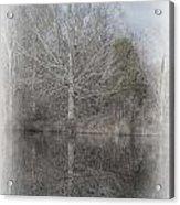 Tree's Reflection Acrylic Print