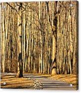 Trees Shadows Acrylic Print