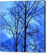 Trees So Tall In Winter Acrylic Print