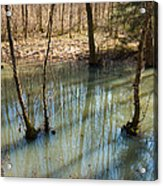 Trees Standing In The Water Acrylic Print