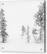 Trees With Hoar Frost Acrylic Print