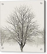 Treeternity Acrylic Print