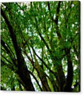 Treetops 2 Acrylic Print