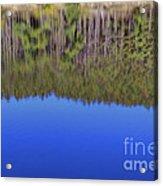 Treflections Acrylic Print