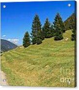 Trentino - Val Di Sole Acrylic Print