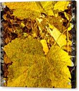 Tribute To Autumn Acrylic Print