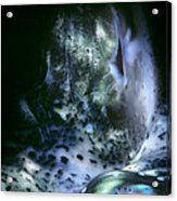 Tridacna Clams 3 Acrylic Print