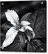 Trillium - Black And White Acrylic Print