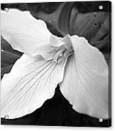 Trillium Flower In Black And White Acrylic Print
