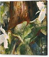 Trillium Woods 3 Acrylic Print