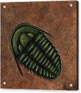 Trilobite Acrylic Print