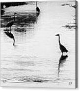 Trilogy - Black And White Acrylic Print