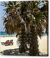 Trincomalee Palms Acrylic Print