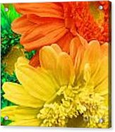 Trio Of Bright Colored Daisies Acrylic Print