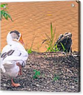 Trio Of Geese Acrylic Print