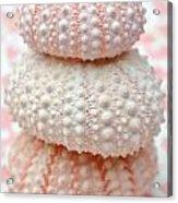 Trio Of Pink Sea Urchins Acrylic Print
