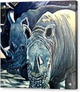Trio Of Rhino Acrylic Print
