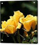 Trio Of Yellow Roses Acrylic Print
