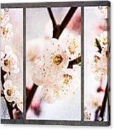 Triptych Light Of Spring 1 Acrylic Print