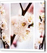 Triptych Light Of Spring 2 Acrylic Print