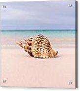 Triton Seashell Acrylic Print