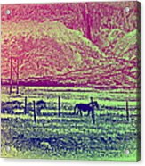 Now And Then You Dream Of The Old Fields Back Home  Acrylic Print