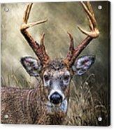 Trophy 10 Point Buck Acrylic Print