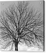 Tropic Winter Acrylic Print