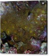 Tropica Fish Acrylic Print