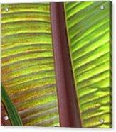 Tropical Banana Leaf Abstract Acrylic Print