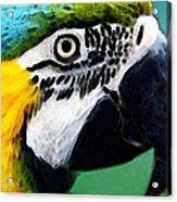 Tropical Bird - Colorful Macaw Acrylic Print