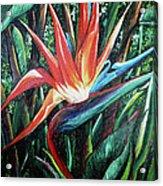 Tropical Bird  Acrylic Print