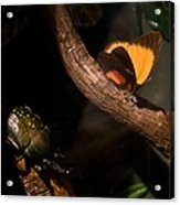 Tropical Butterfly And Rhinoceros Beetle Acrylic Print
