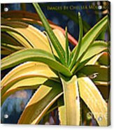 Tropical Cactus Acrylic Print