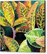 Tropical Colorful Croton Leaves Acrylic Print by Prashant Shah