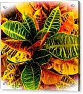 Tropical Croton Vignette Acrylic Print