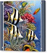 Tropical Fish A Acrylic Print