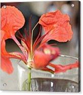 Tropical Flamboyant Flower Acrylic Print
