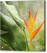 Tropical Flower Acrylic Print by Natalie Kinnear