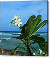 Tropical Flowers Acrylic Print