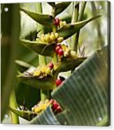Tropical Fountain Of Seeds Acrylic Print