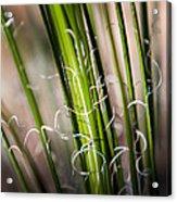 Tropical Grass Acrylic Print