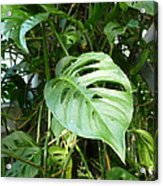 Tropical Green Foliage Acrylic Print