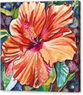 Tropical Hibiscus 5 Acrylic Print