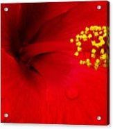 Tropical Hibiscus - Antigua Wind 01a Acrylic Print