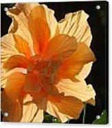 Tropical Hibiscus In The Sun Acrylic Print